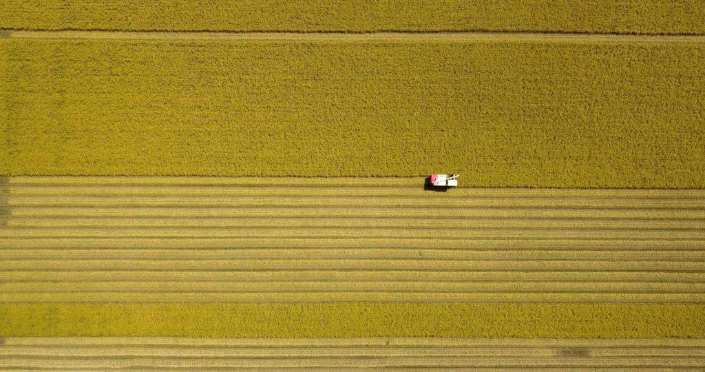 中道農園の稲刈り 空撮
