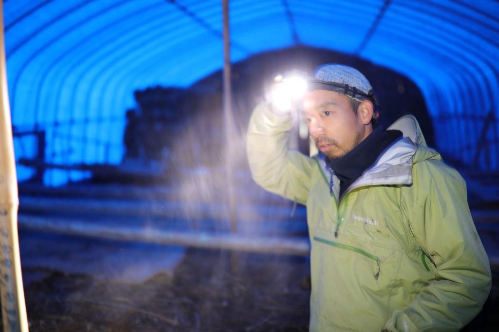 三島独活を栽培するハウスで作業する中井大介氏