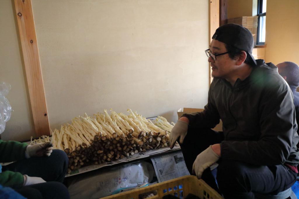 収穫された三島独活の掃除を手伝いながら情報交換する母良田氏