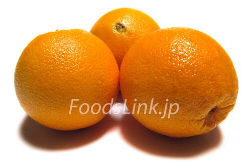 オレンジ ネーブル 「オレンジ」と「ネーブル」の違いは?