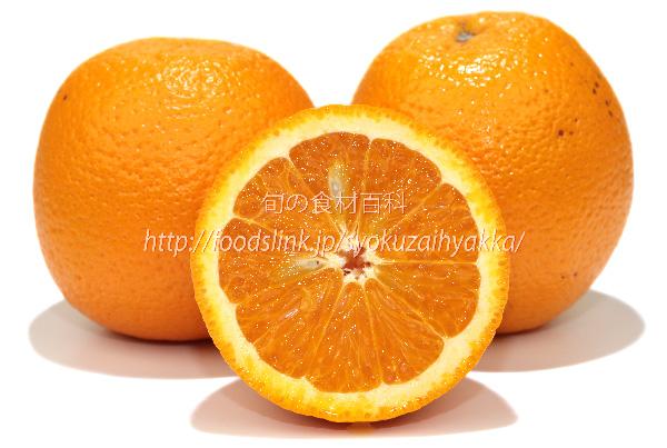 オレンジ ネーブル ネーブルオレンジ