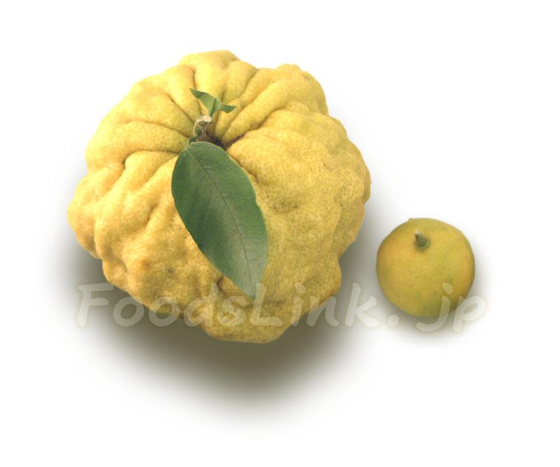 獅子柚子 レシピ 人気