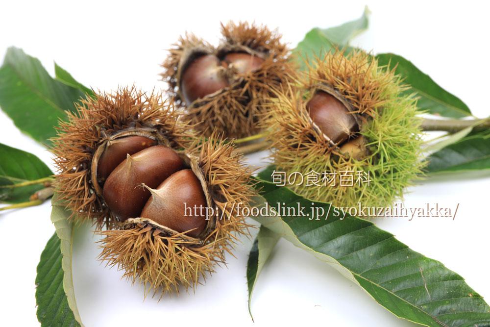 栗・クリ・くり:旬の果物百科