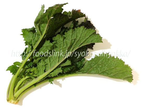 から し 菜 【楽天市場】からしなの種(カラシナ)緑肥用チャガラシ