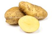 北海黄金,ホッカイコガネ,北海こがね,黄金メーク,ジャガイモ,じゃがいも,ポテト,馬鈴薯