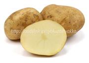 ゆきつぶら,ユキツブラ,ジャガイモ,じゃがいも,ポテト,馬鈴薯